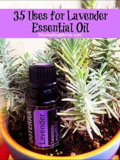 35 Uses for Lavender Essential Oil