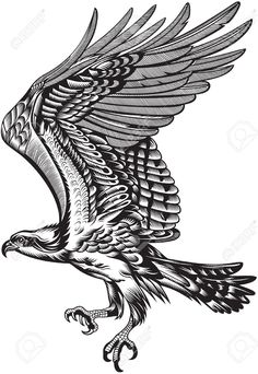 Freedom Soar Stock Illustrations, Cliparts And Royalty Free ...