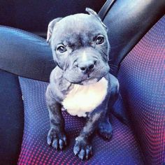 who are you mean muggin beautiful pup!