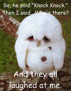 Depressed Baby Owl