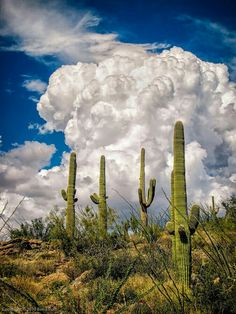 Arizona monsoons in the summer!