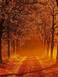 Autumn woods in Baum, The Netherlands
