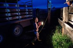 Four-year-old Andy Anderson helps his parents with a cow who is having trouble birthing a calf.
