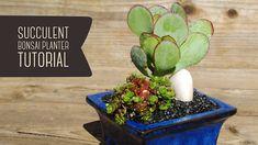 Fickle Prickles - Cacti & Succulents: Succulent Bonsai Planter Tutorial Succulent Bonsai, Cacti And Succulents, Cactus, Create Yourself, Planters, Plant, Window Boxes, Pot Holders, Flower Planters