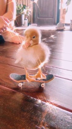 Super Cute Animals, Cute Little Animals, Cute Funny Animals, Pet Ducks, Baby Ducks, Cute Ducklings, Baby Animals Pictures, Cute Rats, Funny Birds