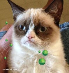 You can do better than Grumpy Cat with http://xmasbeard.com  #XmasBeard #Beard #MerryChristmas #Funny