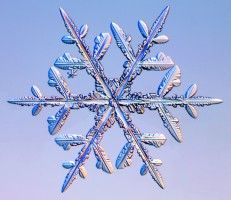This is a real snowflake under a microscope... beautiful