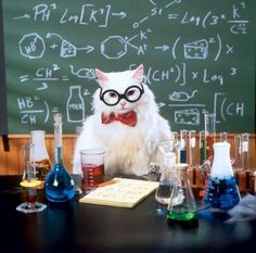 Chemistry Cat Blank Meme Template