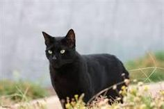 Lost Cat - Domestic Short Hair - Oshawa, ON, Canada