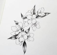Can anybody tell me what kind of flower is in this drawing ? Vintage Flower Tattoo, Simple Flower Tattoo, Small Flower Tattoos, Flower Tattoo Arm, Flower Tattoo Shoulder, Violet Flower Tattoos, Jasmine Flower Tattoos, Violet Tattoo, Floral Tattoo Design