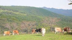 高千穂牧場(宮崎) Takachiho Farm, Miyazaki, Japan