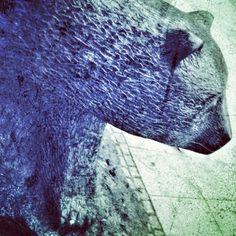Beorn #bear #animal #tier #linden #hannover #statue #art #black #traffic by jackjom, via Flickr