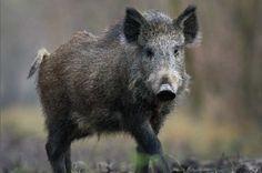"""""""O GRITO DO BICHO"""": Audiência pública decide por mais caçadores para c..."""