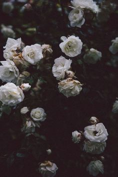 Helena la petite girly b flowers, dark flowers, flower aesthetic. Dark Flowers, Beautiful Flowers, Tumblr Roses, Whatsapp Wallpaper, Flower Aesthetic, Aesthetic Dark, Aesthetic Images, Aesthetic Grunge, Rose Wallpaper