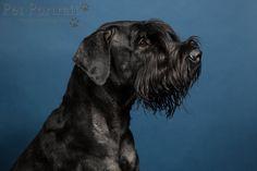 Hondenfotograaf Amsterdam - PetPlan Winner actie - Honden op de Winnershow-26