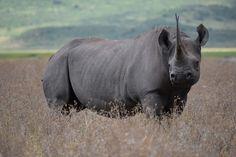 Serengeti National Park, Green Nature, Travel Tours, Travel Agency, Safari, National Parks, Elephant, The Incredibles, Horses