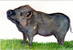 Arthur the pot bellied pig original watercolor, 100 % to EFA Charity of the Month, Cedarhill Animal Sanctuary