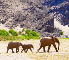Reise nach Namibia - 25 € bei kostenlosem Airbnb, Link im Profil Namibia, Elephant, Link, Animals, Profile, Explore, Environment, Adventure, Voyage