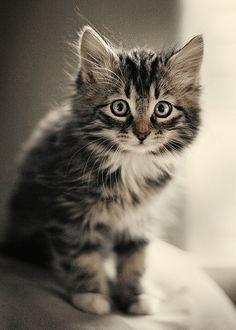 Trés joli chat