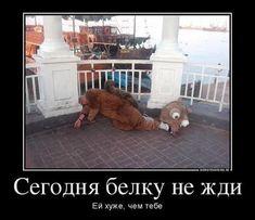 Лента по интересам - Картинки - 795814 - Tabor.ru