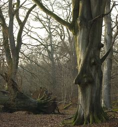 Tree with a face by lovestruck., via Flickr