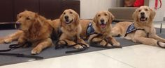 Therapy dogs arrived in Boston to provide comfort to those affected by last year's bombings. #BostonStrong