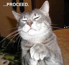 Bildergebnis für funny cat pictures