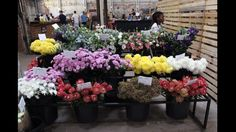 Buy fresh flowers at the Sheds on Fix Street Stuff To Do, Things To Do, Sheds, Fresh Flowers, Street, Plants, Things To Make, Tool Sheds, Shed