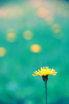 La flor no deseada by мiιтоη, via Flickr #bokeh