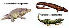 amphitiles.jpg (414×169)