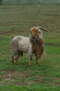 Lancelot's haircut was interrupted by a downpour so now he's Lancelion, the Glorious.