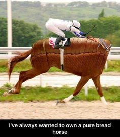 I've always wanted to own a pure bread horse.