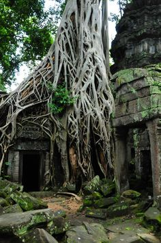 """Angkor, Cambodia Just take a look at these trees. They really look a lot like the Ents from """"The Lord of the Rings,"""" do they not? These marvelous and ancient trees can be found in a huge complex of the 12th century temples in Cambodia, called Angkor."""