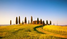 Cipressi by Francesco Riccardo Iacomino, via 500px