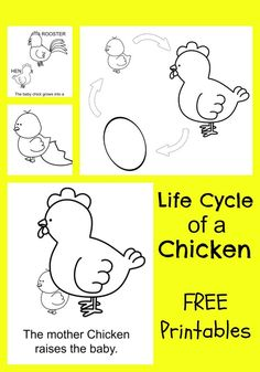 FREE Printable Chicken Life Cycle Coloring Pages e-book for Kids and teachers. SO CUTE!! Perfect for science lessons and classroom centers.