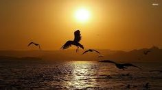 Image result for sunset animal silhouettes