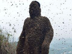 Man-Wearing-Bees-Suit-1-8.jpg 992×744 pixels