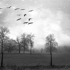 Dreary Winter