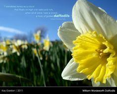 William Wordsworth Daffodils by *Special-K-001 (via deviantART)