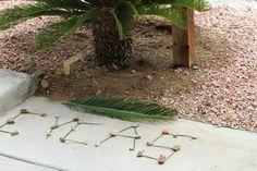 Cycas revoluta leaflets and stones, Henderson NV