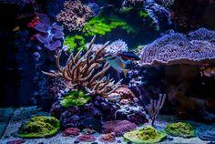 Greg Carroll's (gcarroll) 225 US-Gallon Reef Aquarium Saltwater Tank, Saltwater Aquarium, Freshwater Aquarium, Aquarium Fish, Salt Water Fish, Salt And Water, Fresh Water, Coral Reef Aquarium, Coral Reefs
