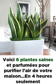 Voici 6 plantes saines et parfumées pour purifier l'air de votre maison…En … Here are 6 healthy and scented plants to purify the air of your home … In only 4 hours! House Near Water, Plants Quotes, Decoration Plante, Modern Master Bedroom, Modern Masters, Bedroom Plants, Blue Rooms, Cool Plants, Beach House Decor
