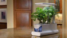 Indoor Herb Garden Appliance