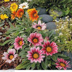 Drought-tolerant plants | Garden Gate eNotes