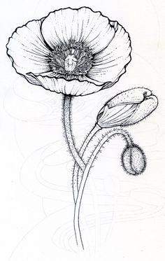 Poppy Flower Drawing Poppy Clipart Etc Susies 1944 Board