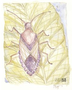 Stinky Bug - Fine Art Print