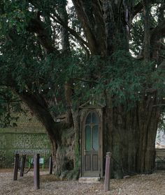 A chapel built in a yew trunk in La Haye-de-Routot, France     The soul is bone