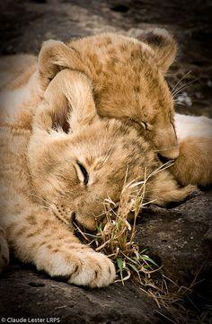 Africa | Sweet Dreams