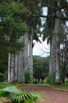 Parque Schwelm EL DORADO MISIONES ARGENTINA