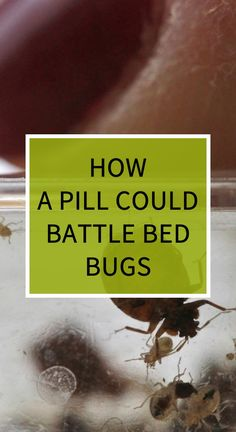 How a Pill Could Battle Bed Bugs Herbal Remedies, Health Remedies, Natural Remedies, Health Quiz, Health And Wellness, Health Tips, Health Care, Medical Conferences